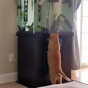 Max is keeping tabs on the fish